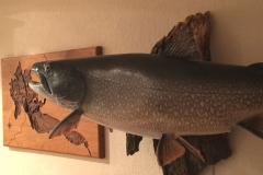 Trout mounting